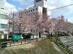 fukurogawa_sakura20070403.JPG